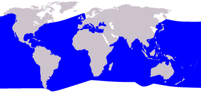 Cuvier's Beaked Whale habitat map