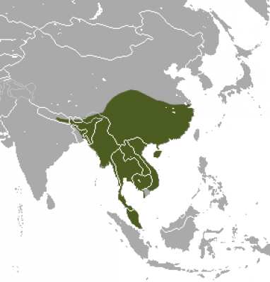 Large Indian Civet habitat map