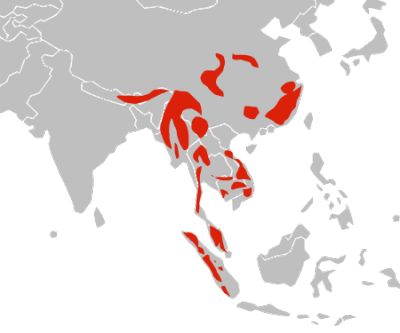 Asian Golden Cat habitat map