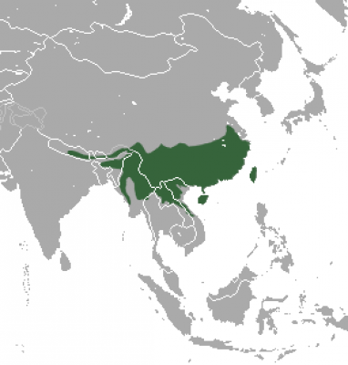 Chinese Pangolin habitat map
