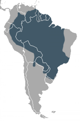 South American Coati habitat map