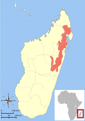 Eastern Woolly Lemur habitat map