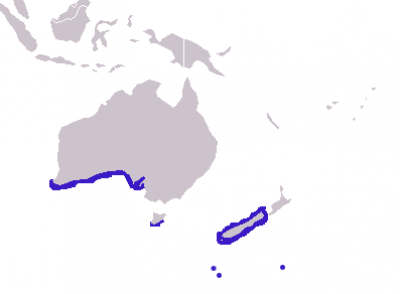 New Zealand Fur Seal habitat map
