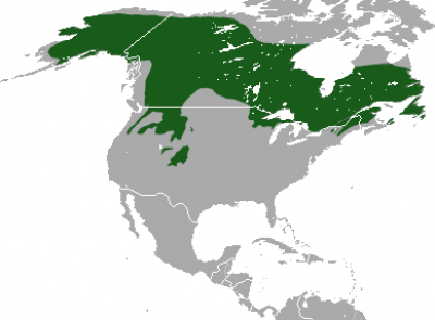 Canadian Lynx habitat map