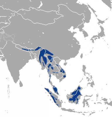 Marbled Cat habitat map