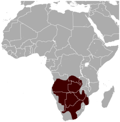 South African Springhare habitat map
