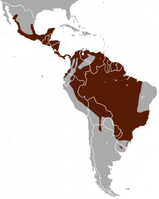 Margay habitat map