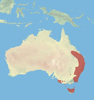 Red-Necked Wallaby habitat map