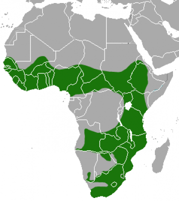 African Clawless Otter habitat map