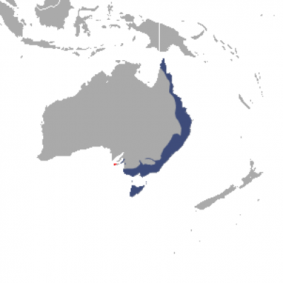 Common Ringtail Possum habitat map