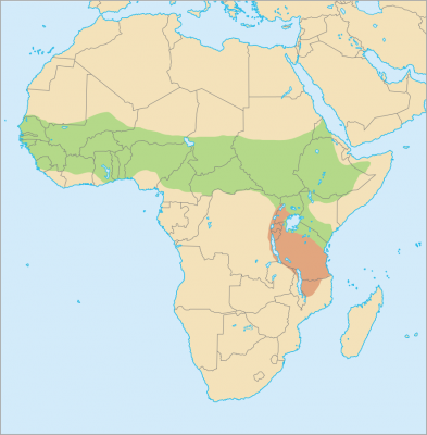 Senegal Bushbaby habitat map