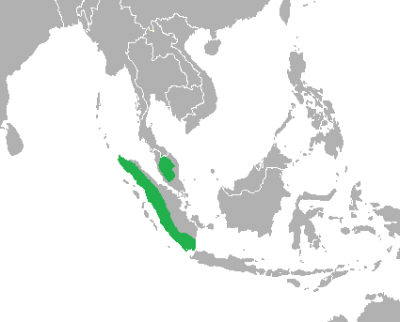 Siamang Gibbon habitat map