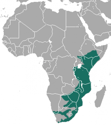 Vervet Monkey habitat map