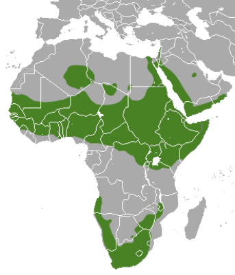 Rock Hyrax habitat map