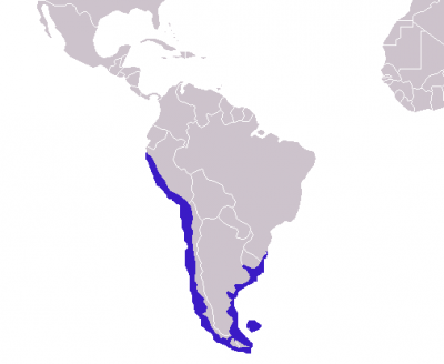 South American Sea Lion habitat map