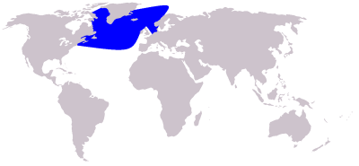 Northern Bottlenose Whale habitat map