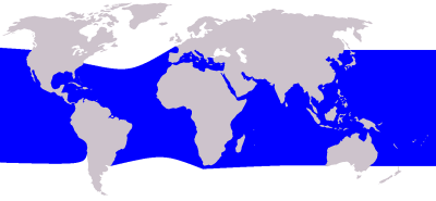 Rough-Toothed Dolphin habitat map