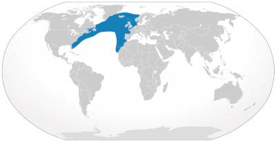 North Atlantic Right Whale habitat map