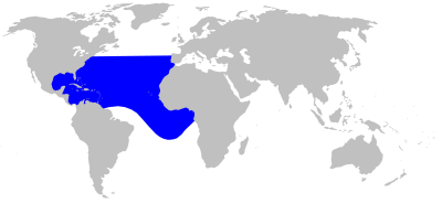 Gervai's Beaked Whale  habitat map