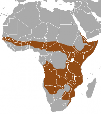 Banded Mongoose habitat map