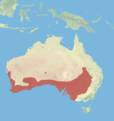 Western Grey Kangaroo habitat map