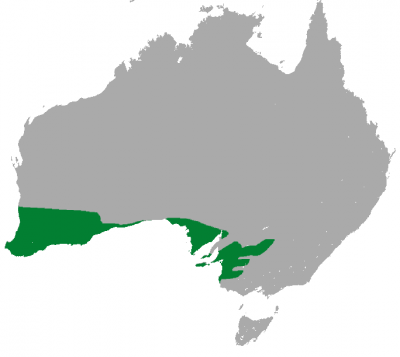 Western Pygmy Possum habitat map