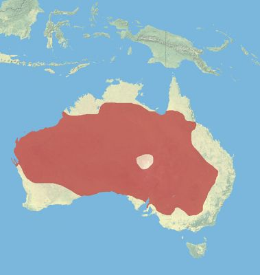 Red Kangaroo habitat map