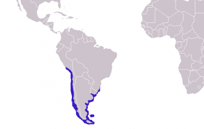 South American Fur Seal habitat map