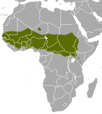 Patas Monkey habitat map