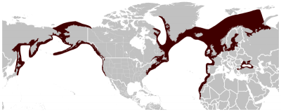 Harbour Porpoise habitat map