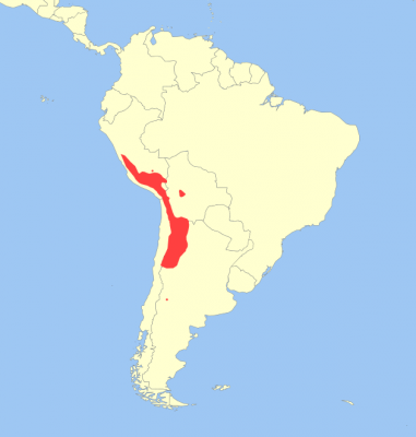 Andean Mountain Cat habitat map