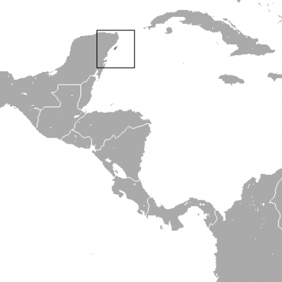 Cozumel Raccoon habitat map