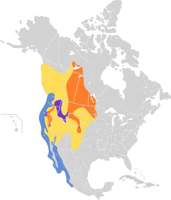 California Gull habitat map