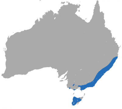 Dusky Antechinus habitat map