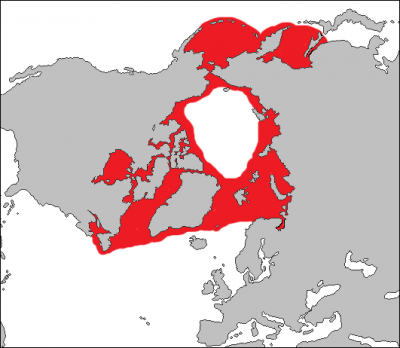 Bearded Seal habitat map