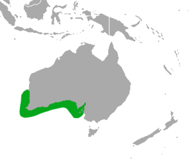 Australian Sea Lion habitat map