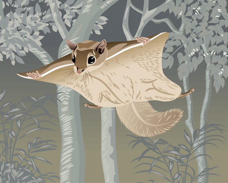 Woolly Flying Squirrel