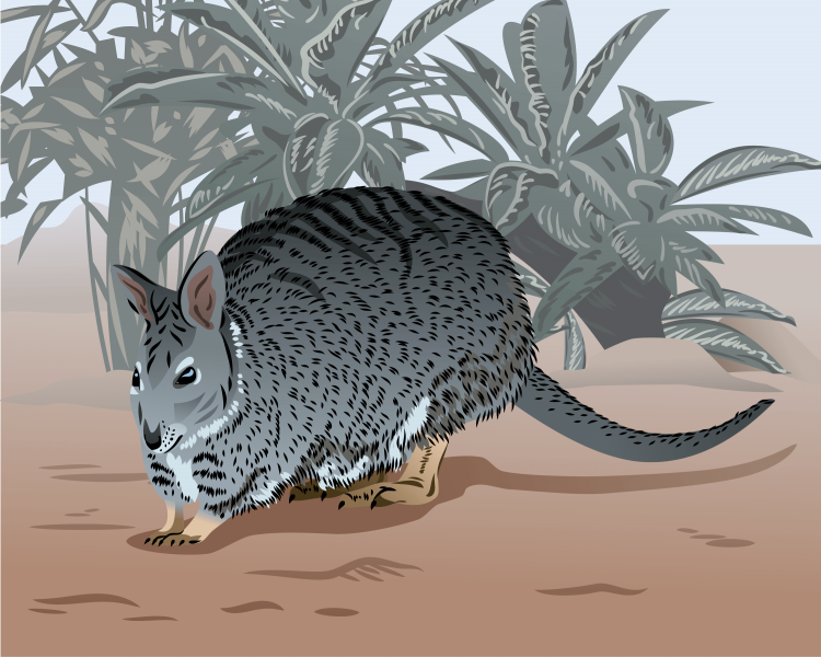 Banded Hare-Wallaby