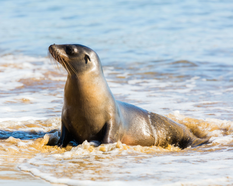 what is a sea lions diet