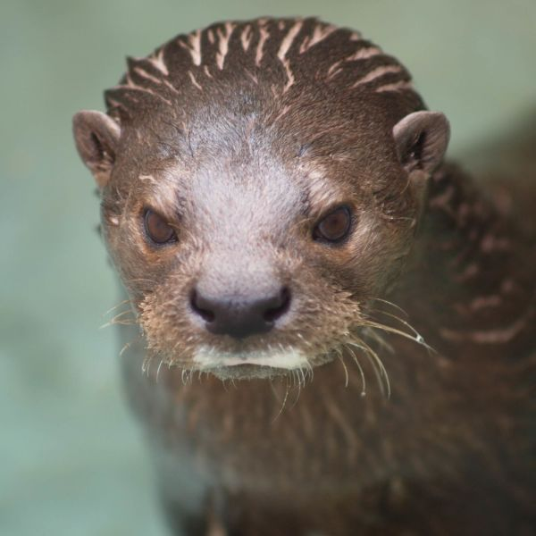 Otter Two 1177