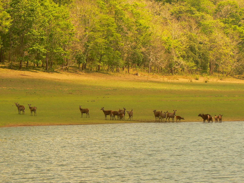 Deer Herds' Quench