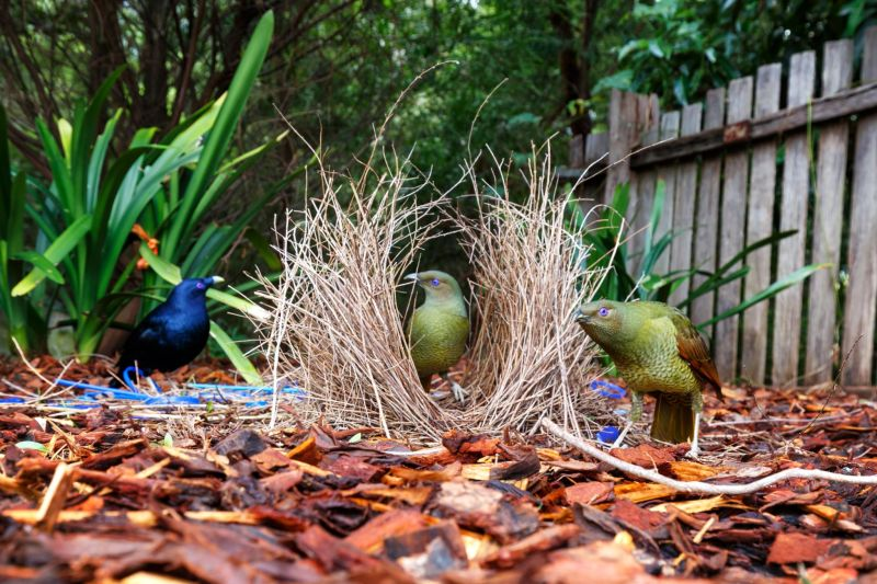 in the bower...