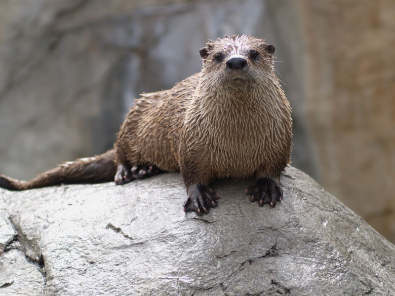 Otter One 1171