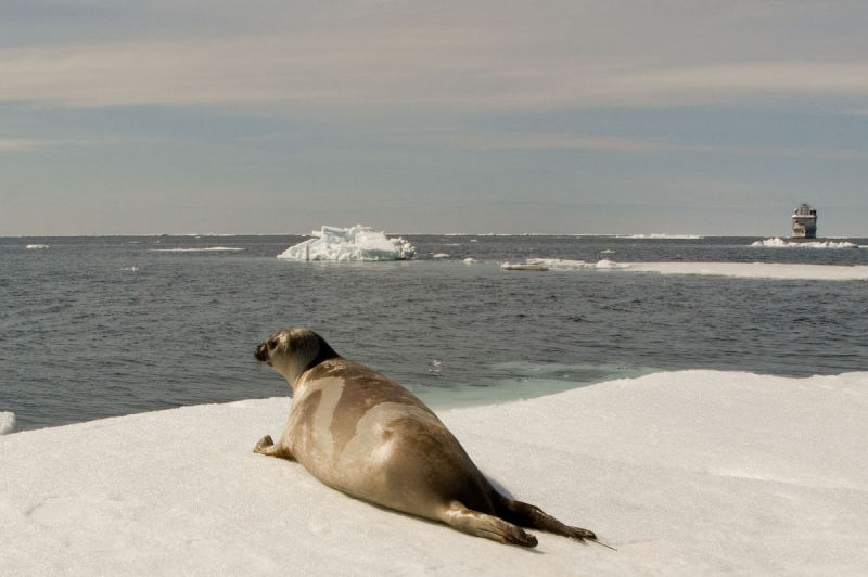 Ribbon Seal with Dyson I