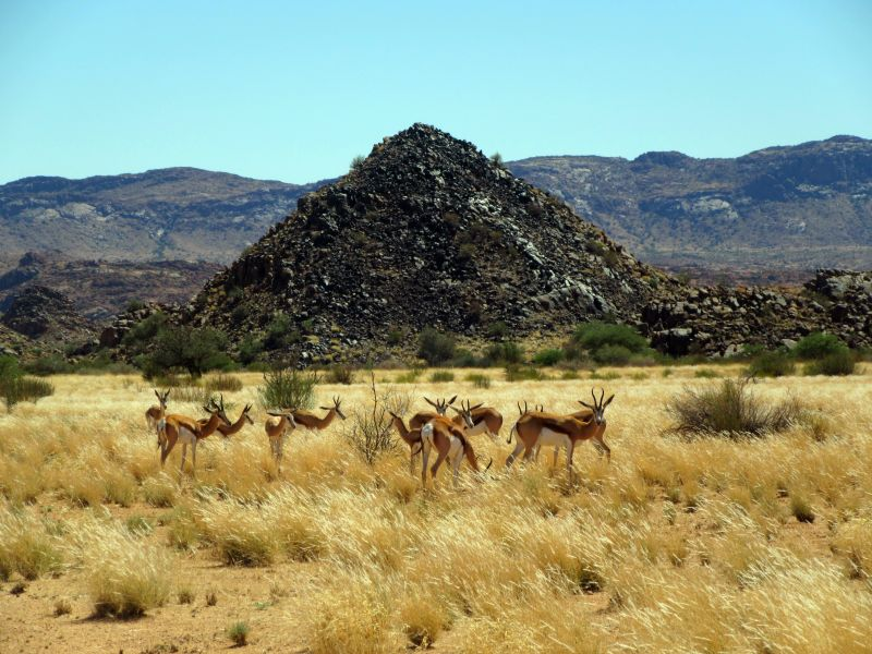 Springboks and hill  Augrabies Falls National Park South Africa