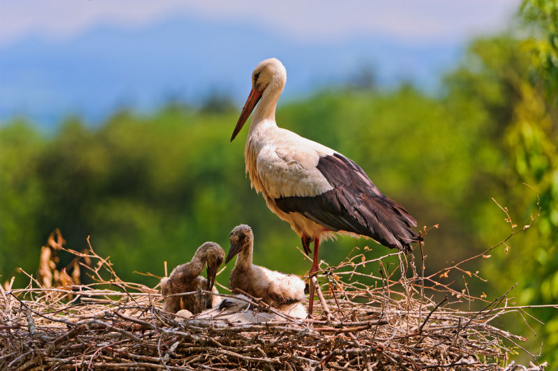 Stork and babies