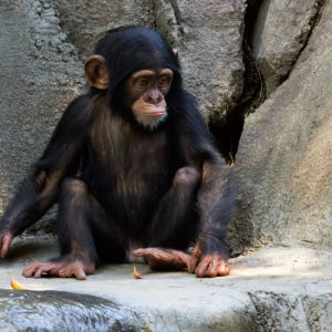 CHIMP130907_596-Edit-Edit
