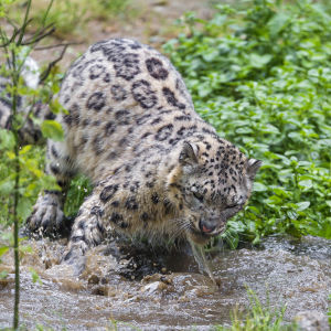 Pator playing with the water